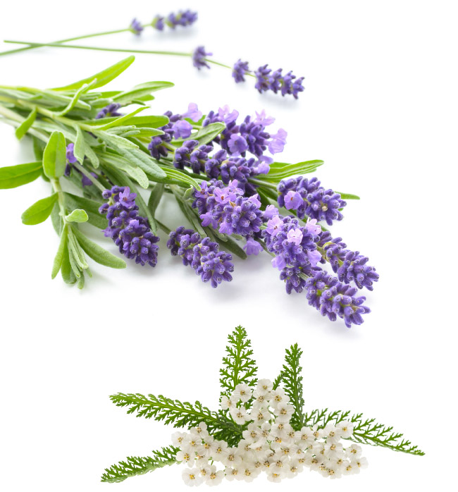 Lavendel, Schafgarbe