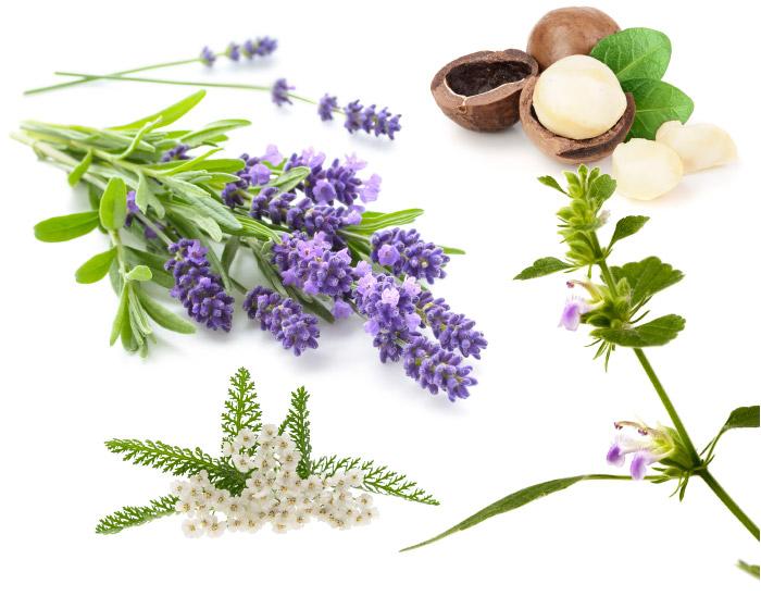 Lavendel, Macadamianuss, Narde, Schafgarbe